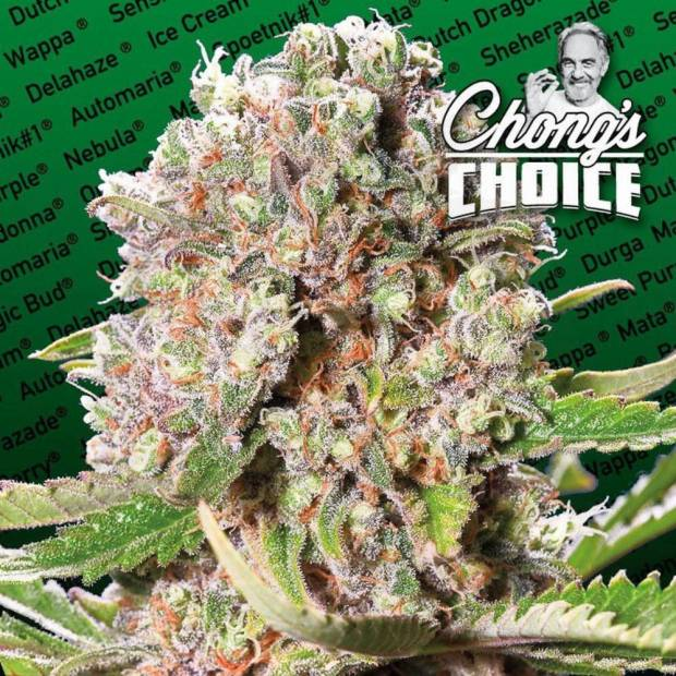 cannabis_kannabisz_seed_seeds_hanfsamen_kender_mag_paradise_seeds_mendocino_skunk