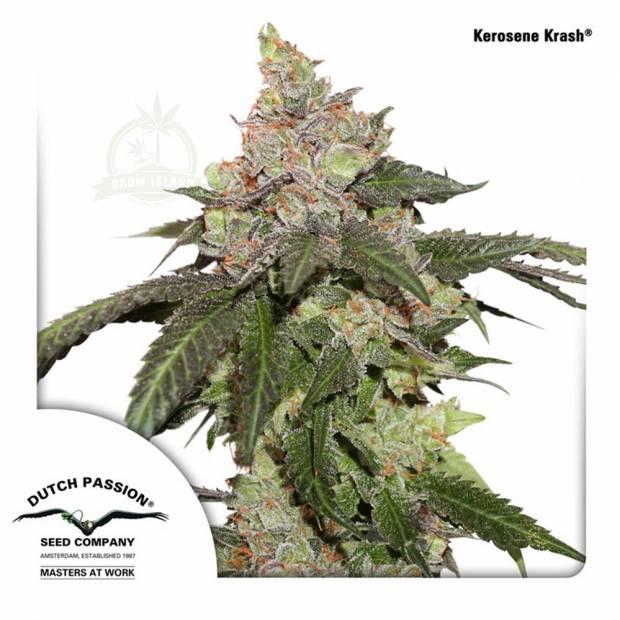 cannabis_kannabisz_seed_seeds_hanfsamen_kender_mag_dutch-passion_kerosene_krash