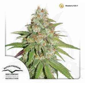 cannabis_kannabisz_seed_seeds_hanfsamen_kender_mag_dutch_passion_glueberry_og